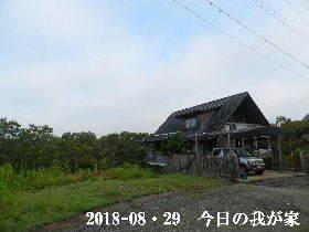2018-08・29 今日の里山は・・・ (1).JPG