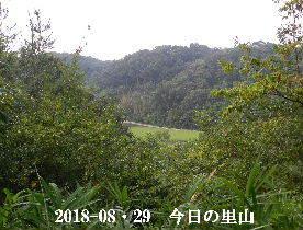 2018-08・29 今日の里山は・・・ (3).JPG