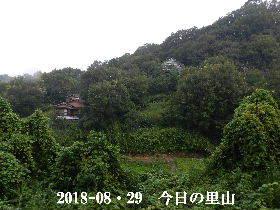 2018-08・29 今日の里山は・・・ (4).JPG