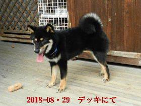 2018-08・29 今日の麻呂 (8).JPG