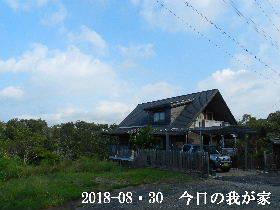 2018-08・30 今日の里山は・・・ (1).JPG