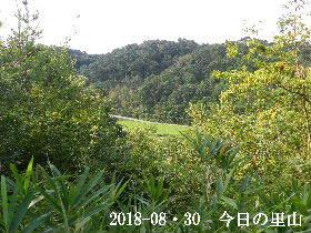 2018-08・30 今日の里山は・・・ (3).JPG