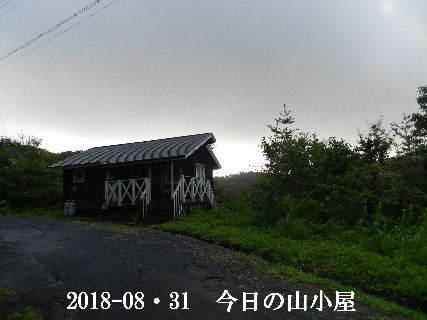 2018-08・31 今日の里山は・・・ (1).JPG