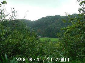 2018-08・31 今日の里山は・・・ (2).JPG