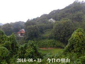 2018-08・31 今日の里山は・・・ (3).JPG