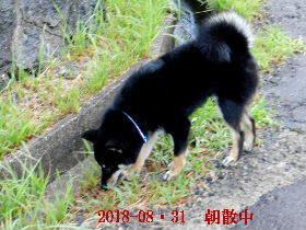 2018-08・31 今日の麻呂 (2).JPG