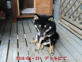2018-08・31 今日の麻呂 (6).JPG