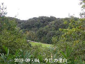 2018-09・04 今日の里山は・・・ (3).JPG