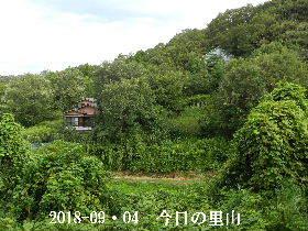 2018-09・04 今日の里山は・・・ (4).JPG