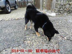 2018-09・04 今日の麻呂 (4).JPG