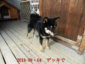 2018-09・04 今日の麻呂 (5).JPG
