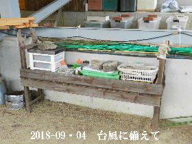 2018-09・04 我が家のスナップ・・・ (3).JPG