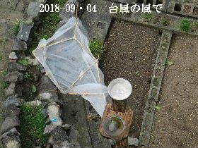 2018-09・04 我が家のスナップ・・・ (4).JPG