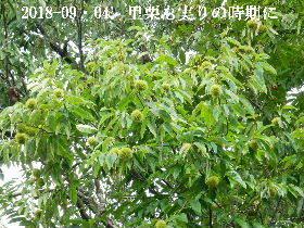 2018-09・04 朝散歩での出遭い (1).JPG