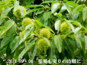 2018-09・04 朝散歩での出遭い (2).JPG