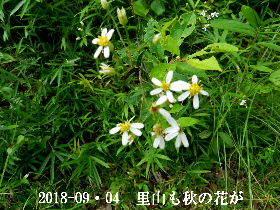 2018-09・04 朝散歩での出遭い (3).JPG