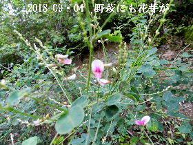2018-09・04 朝散歩での出遭い (4).JPG