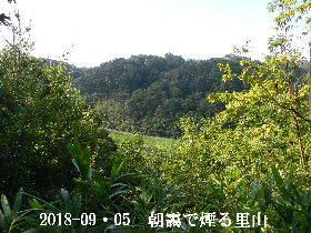 2018-09・05 今日の里山は・・・ (3).JPG