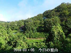 2018-09・05 今日の里山は・・・ (4).JPG