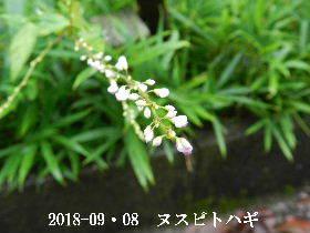 2018-09・08 今日の出遭い・・・ (2).JPG