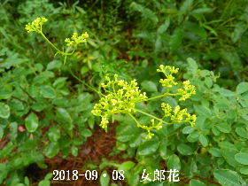 2018-09・08 今日の出遭い・・・ (3).JPG