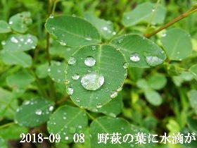 2018-09・08 今日の出遭い・・・ (5).JPG