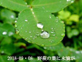 2018-09・08 今日の出遭い・・・ (6).JPG