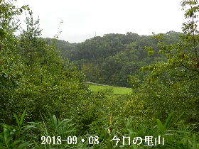 2018-09・08 今日の里山は・・・ (3).JPG