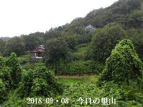 2018-09・08 今日の里山は・・・ (4).JPG