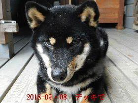 2018-09・08 今日の麻呂 (8).JPG