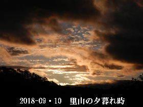2018-09・10 里山の夕暮れ時 (1).JPG