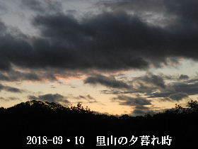 2018-09・10 里山の夕暮れ時 (3).JPG
