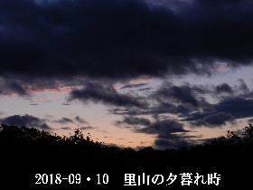 2018-09・10 里山の夕暮れ時 (4).JPG