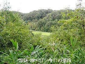 2018-09・11 今日の里山は・・・ (3).JPG