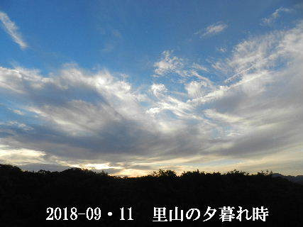 2018-09・11 里山の夕暮れ時 (1).JPG