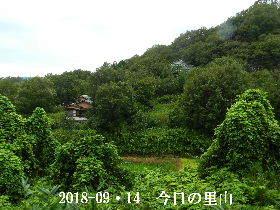 2018-09・14 今日の里山は・・・ (4).JPG