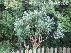 2018-09・21 我が家のスナップ・・・ (1).JPG