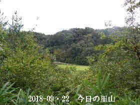 2018-09・22 今日の里山は・・・ (3).JPG