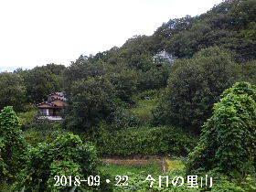 2018-09・22 今日の里山は・・・ (4).JPG