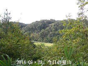 2018-09・23 今日の里山・・・ (3).JPG