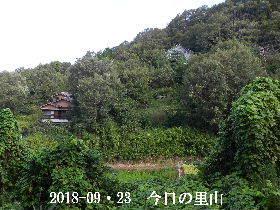 2018-09・23 今日の里山・・・ (4).JPG