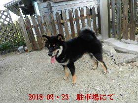 2018-09・23 今日の麻呂 (5).JPG