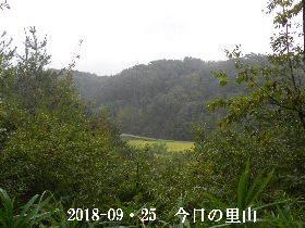2018-09・25 今日の里山は・・・ (3).JPG
