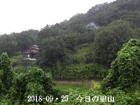 2018-09・25 今日の里山は・・・ (4).JPG
