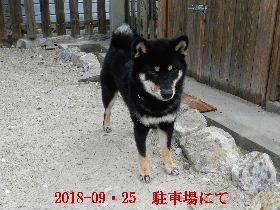 2018-09・25 今日の麻呂 (4).JPG