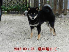 2018-09・25 今日の麻呂 (5).JPG