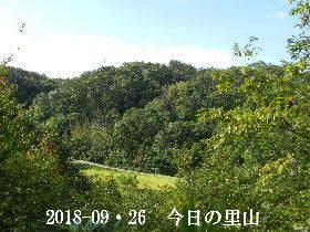 2018-09・26 今日の里山は・・・ (3).JPG