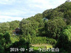 2018-09・26 今日の里山は・・・ (4).JPG