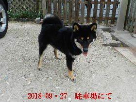 2018-09・27 今日の麻呂 (6).JPG