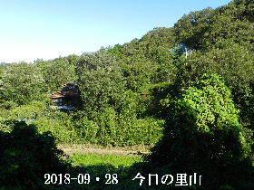 2018-09・28 今日の里山は・・・ (4).JPG